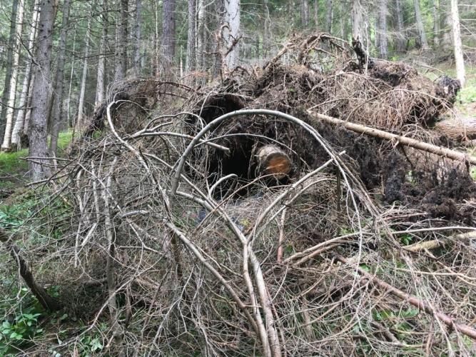 Perfektes Versteck unter Bäumen und Sträuchern